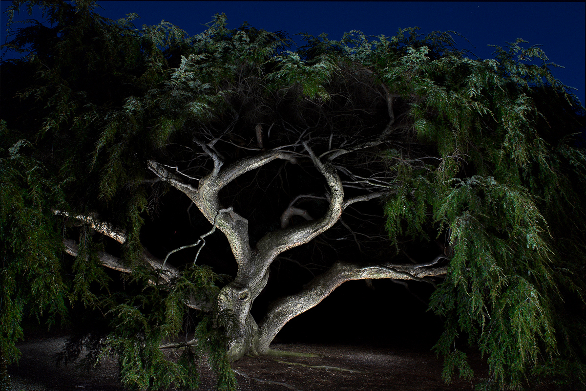 One-on-One light painting lesson | Harold Ross Fine Art Photography for light painting photography tree  181pct
