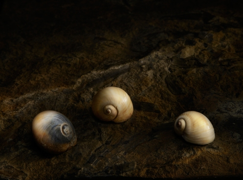 Harold Ross's Light Painting Student, Susan MacKenzie's Still Life Photograph