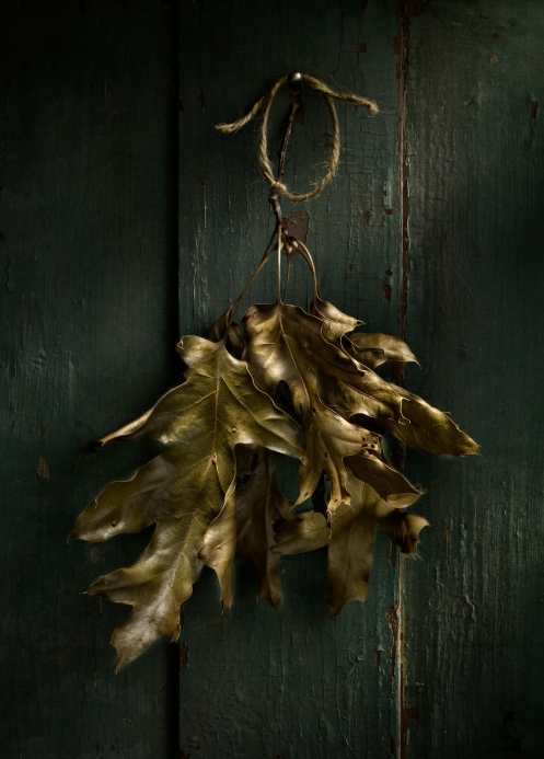 Light Painted image of Leaves on a Door by Photographer Harold Ross