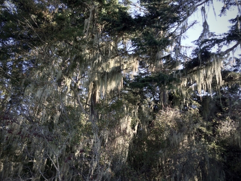Washington Spanish Moss by Vera