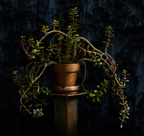 Light Painted Jade Plant by photographer Harold Ross